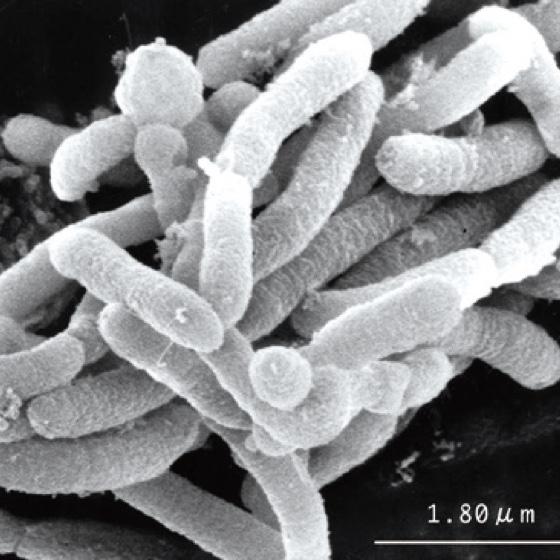 堆肥中の微生物