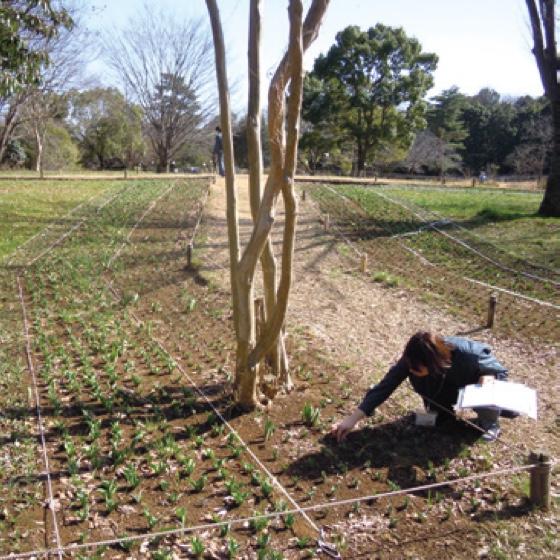 農業利用における植物の病害予防